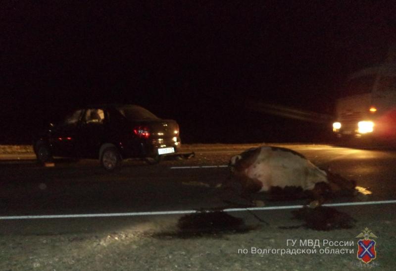 Под Волгоградом шофёр «Лады» сбил корову ипопал в поликлинику